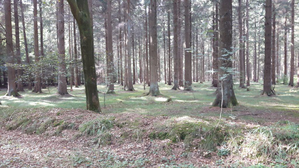 Wald Waldversicherung